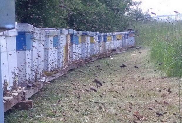 Pčelarsko gazdinstvo Brkić